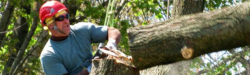 Tree Stump Removal 03